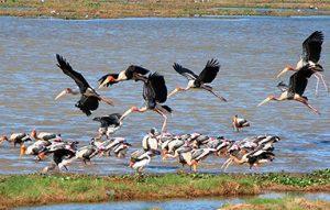 Arugam bay migrant birds